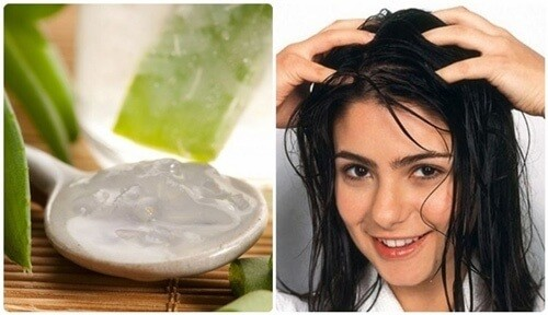lô hội tốt cho tóc